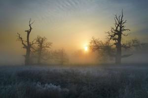 1. wyróżnienie Dęby rogalińskie, Rogaliński Park Krajobrazowy (fot. Ferb1972)
