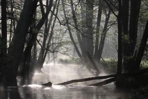 miejsce 5.  Specjalny obszar ochrony siedlisk Rzeka Pasłęka (fot. Hubert Ignatowicz)