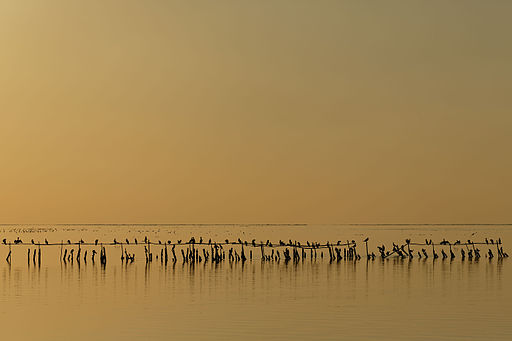 Miejsce ósme: kormorany o zmierzchu nad słonym jeziorem Étang de Vaccarès w delcie Rodanu, Francja. Fotografia autorstwa użytkownika Ddeveze, dostępna na licencji CC-by-SA 3.0
