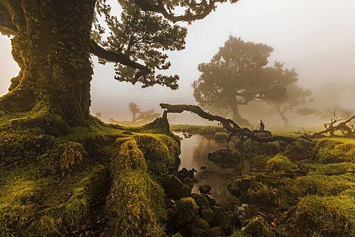 Miejsce drugie: widok na las wawrzynolistny na Maderze w Portugalii. Fotografia autorstwa użytkownika Jnvalves, dostępna na licencji CC BY-SA 3.0