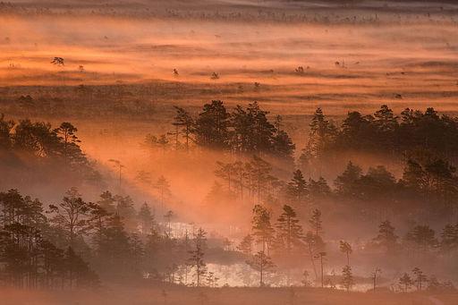 Miejsce czternaste: Poranek na bagnach Tolkuse, Rezerwat Natury Luitemaa, powiat parneński, Estonia. Fotografia autorstwa użytkownika Märt Kose, dostępna na licencji CC-by-SA 3.0