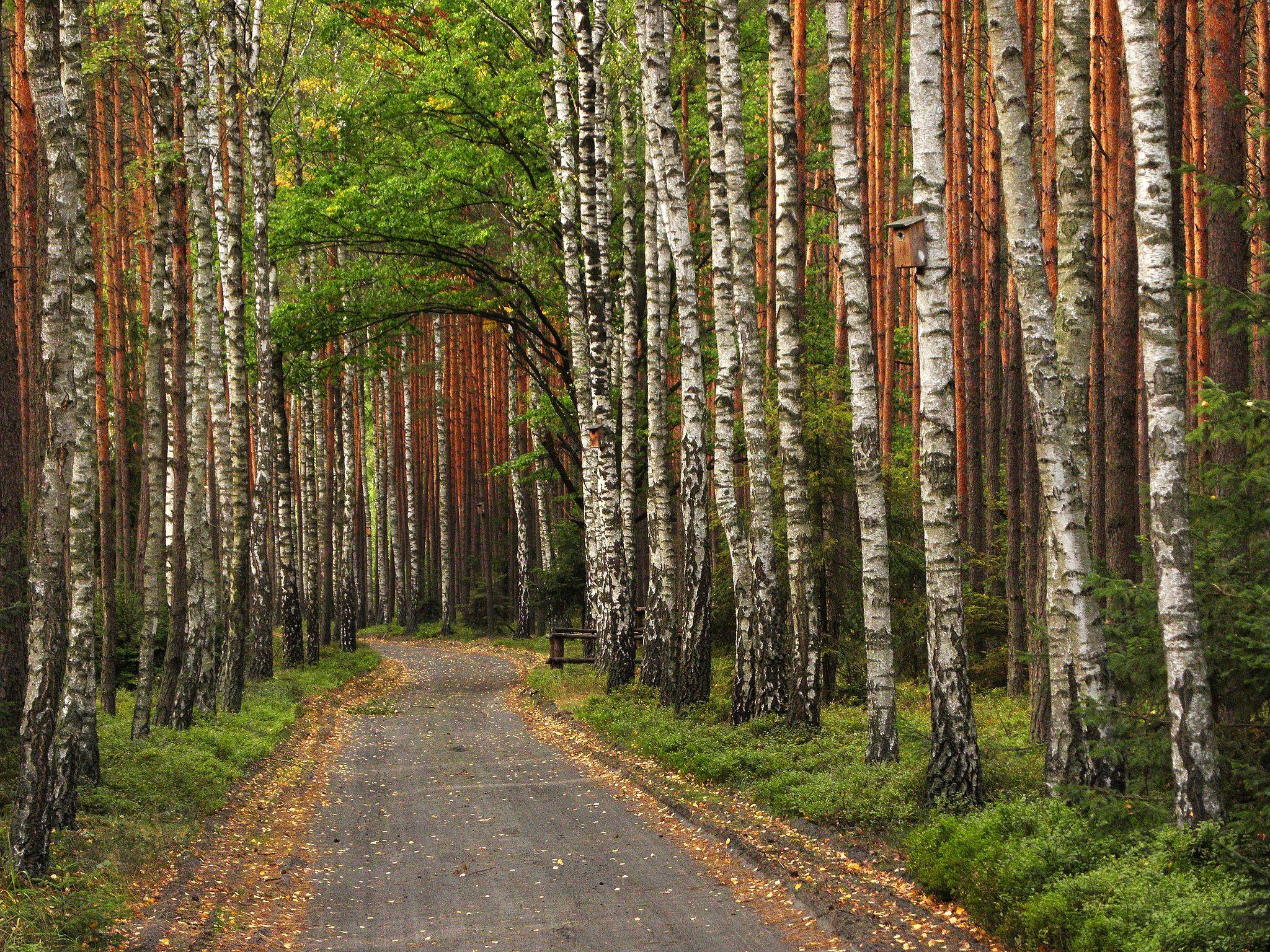 Sobrawski Park Narodowy autor: SuperGlob, CC-BY-SA 3.0